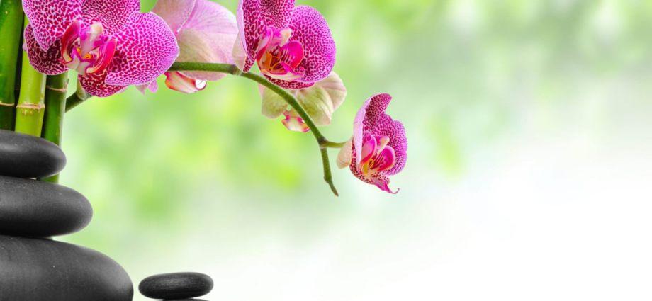 pour votre bien-être dans l'harmonie